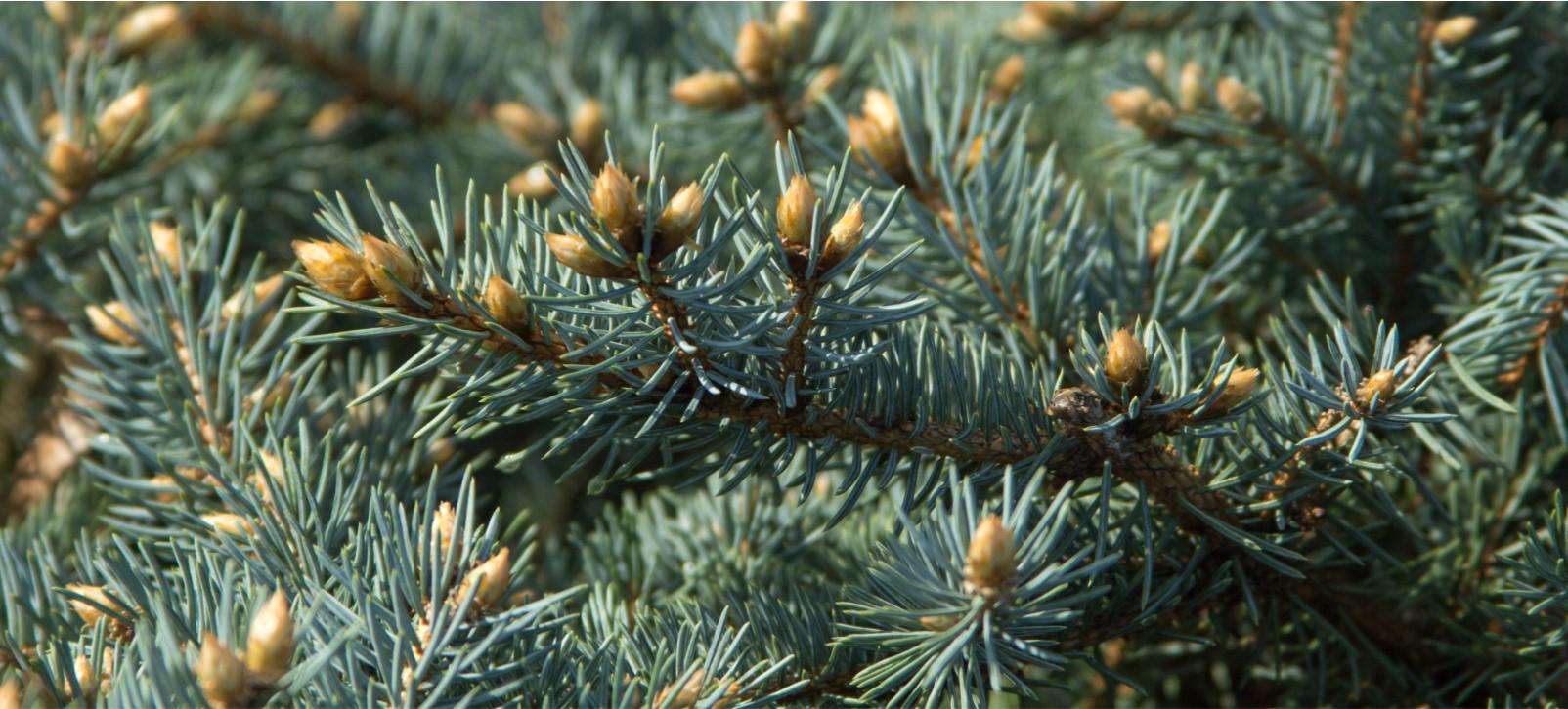 Tree Directory